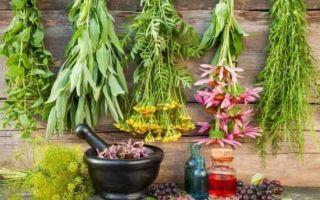 Лечение ревматоидного артрита при помощи лекарственных растений