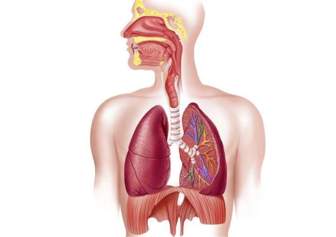 поражение дыхательной системы при ревматоидном артрите